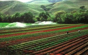Agro - Iacol